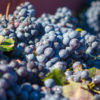 tannins in wine